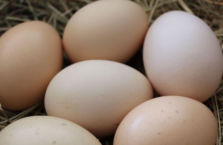 Eggs (Courtesy: Wikimedia/ Kruppert Cubalaya)