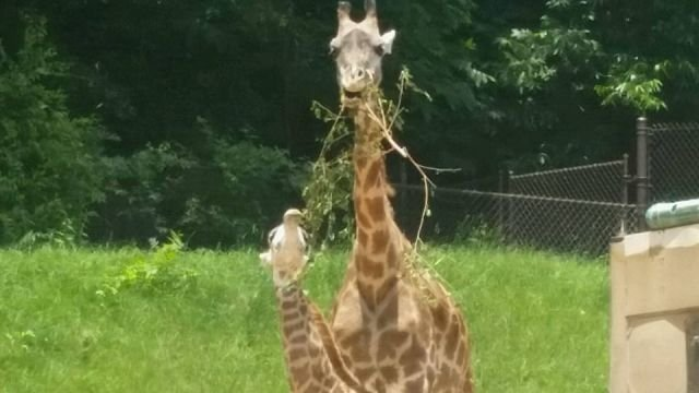 Walter with Kiko (Source: The Greenville Zoo/ Facebook)