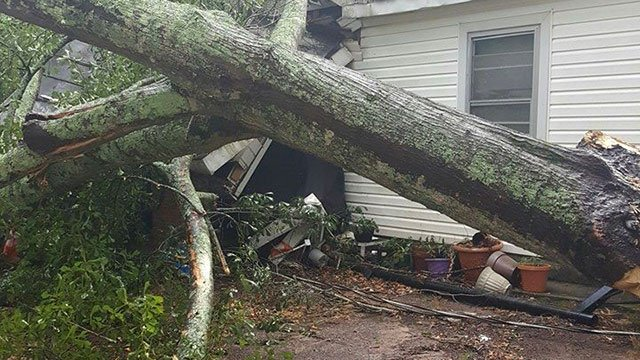 Tree on Westminster home (Source: Jesse Kelley)