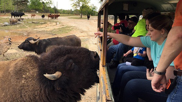 Guests take a Safari ride at Hollywild Animal Park in Wellford. (Source: Hollywild Animal Park)