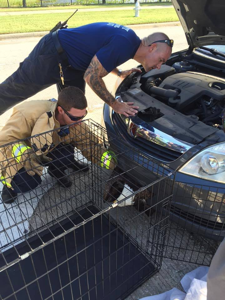 Bald eagle rescue (Source: Clay Co. Sheriff's Office)