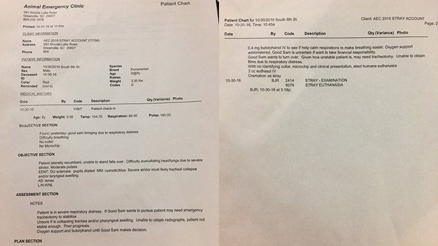 Meeka's records from Animal Emergency Clinic. (Source: Family)