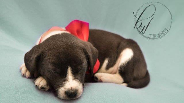 Greenville newborn photographer photographs puppies and kittens from Greenville Humane Society to help them get adopted. (Source: Emily Smith via Beth Warren Photography)