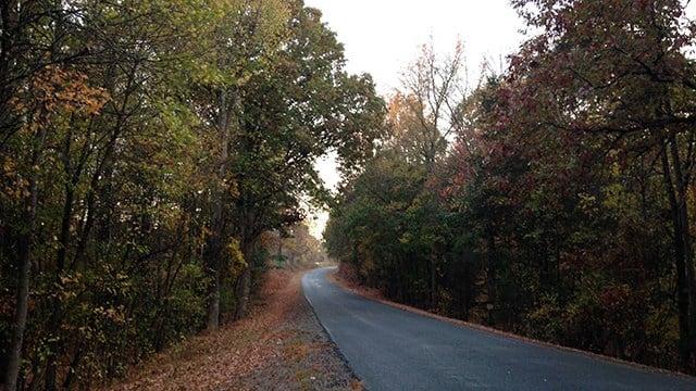 Wooded area where hunter found. (November 13, 2016 FOX Carolina)