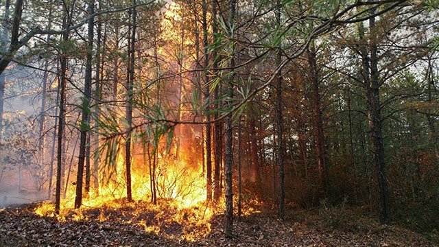FEMA will assist with firefighting costs at the Chestnut Knob Fire in Burke Co. NC. (Source: Chestnut Knob Fire Facebook)