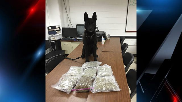 Nero (Source: Greenville Co. Sheriff's Office)