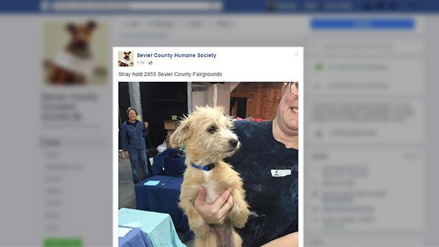 Stray dog rescued during wildfires (Source: Sevier Co. Humane Society)