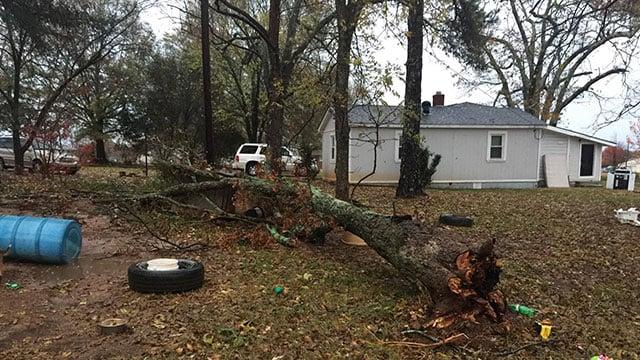 Tree falling at Williamston. (Source: Caroline Elizabeth Segars)