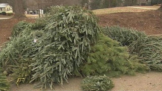 Christmas trees being recycled (December 26, 2016 FOX Carolina)