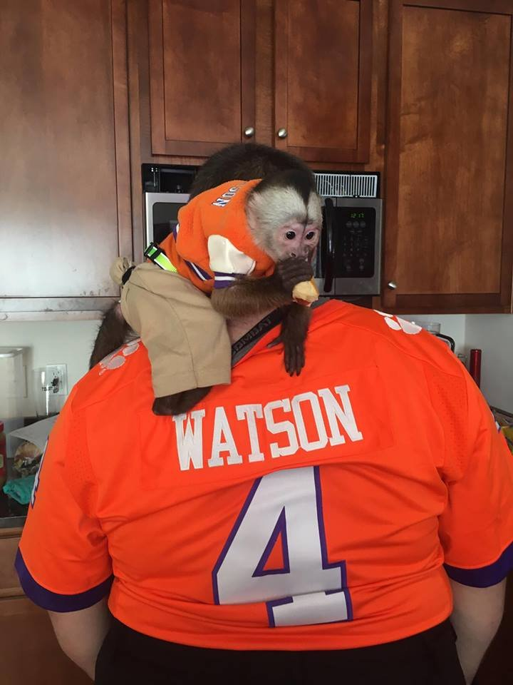 single women in clemson Search the tigers shop at fanaticscom for all the latest clemson merchandise including officially licensed  clemson tigers women's sherpa super soft .