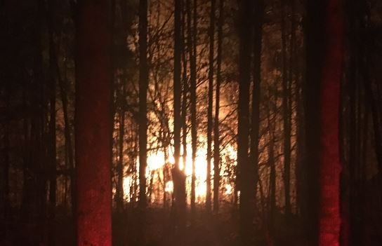 Fire as seen through the trees (Courtesy: Fire Chief Travis Collins)