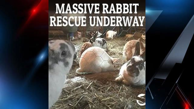 Rabbit rescue myrtle beach sc