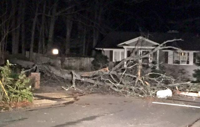 Tree down on McDaniel (FOX Carolina/ Mar. 2, 2017)