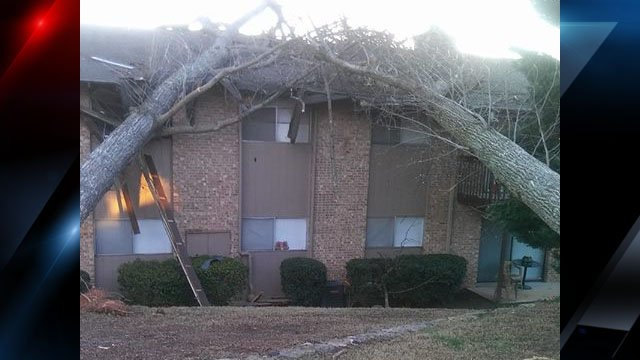 Photo of the trees on the apartment building (Courtesy: Carla McKay)