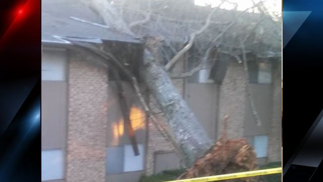 Photo of another tree on the apartment building (Courtesy: Carla McKay)