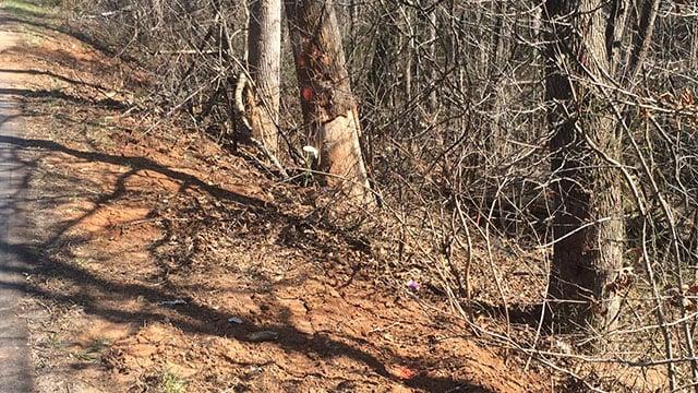Scene of fatal collision on SC 414. (March 4, 2017 FOX Carolina)