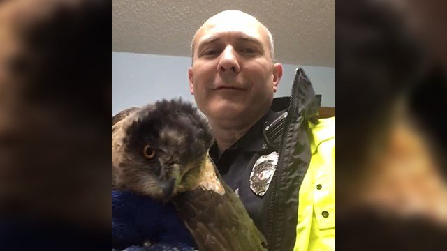 SRO Bibler poses with rescued hawk (Source: Spartanburg PD)