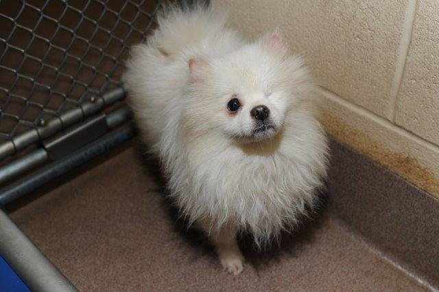 One of the dogs rescued from the home (Source Henderson Co. Animal Shelter)