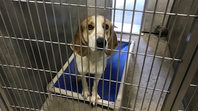 Greenville Co. Animal Care shelter. (March 11, 2017 FOX Carolina)