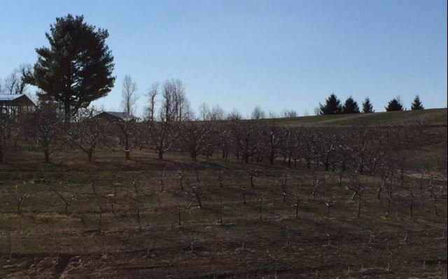 Bare branches at Sky Top Apple Orchard (FOX Carolina/ March 15, 2017)