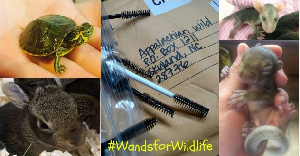 Wands for Wildlife (Source: Appalachian Wildlife)