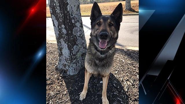 Greenville PD K9 Officer Valor (Source: Facebook)