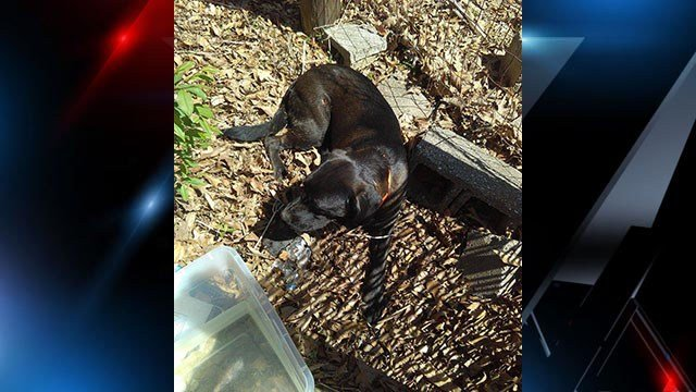 Owner sought after dog reportedly found with multiple gunshot wounds in Belton (Source: iWitness)