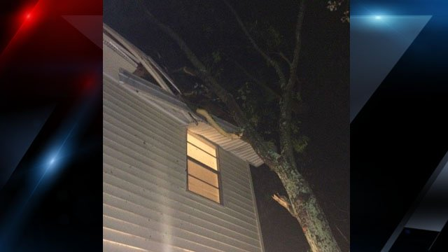 Photo of the tree onto the apartment (Courtesy: Laurie Pravia)