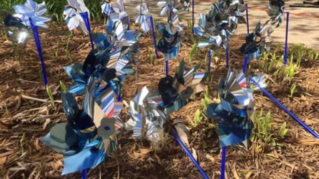 Pinwheel garden in the Upstate (Apr. 6, 2017/FOX Carolina)