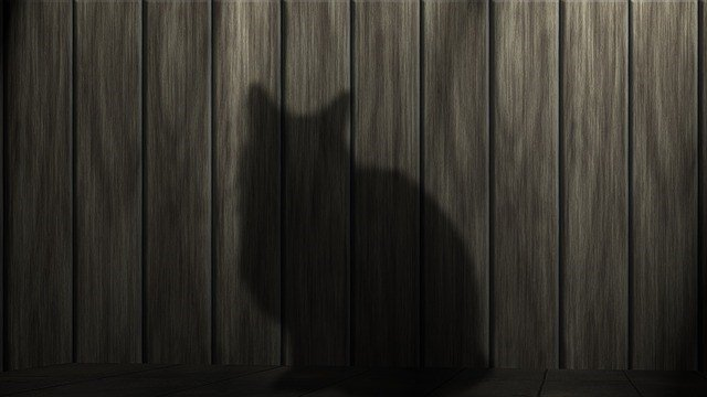 Cat silhouette (Source: Pixabay)