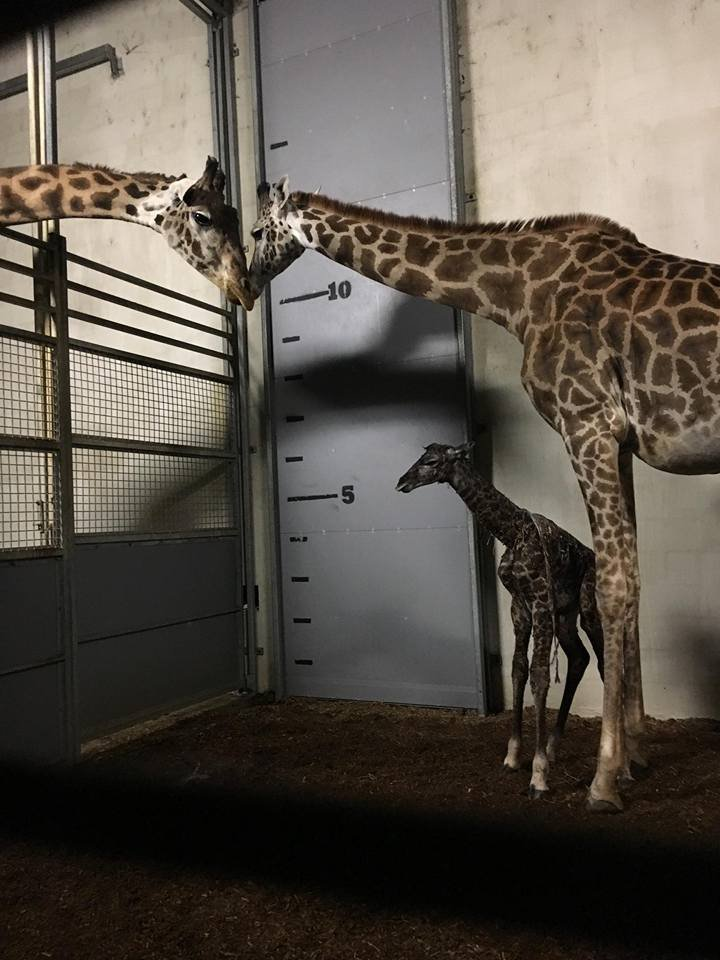 Walter with Autumn and one of their babies (Courtesy: Greenville Zoo)