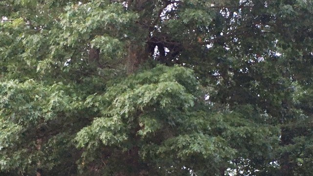 Bear spotted in Chesnee (top right of center). (6/6/17 FOX Carolina)
