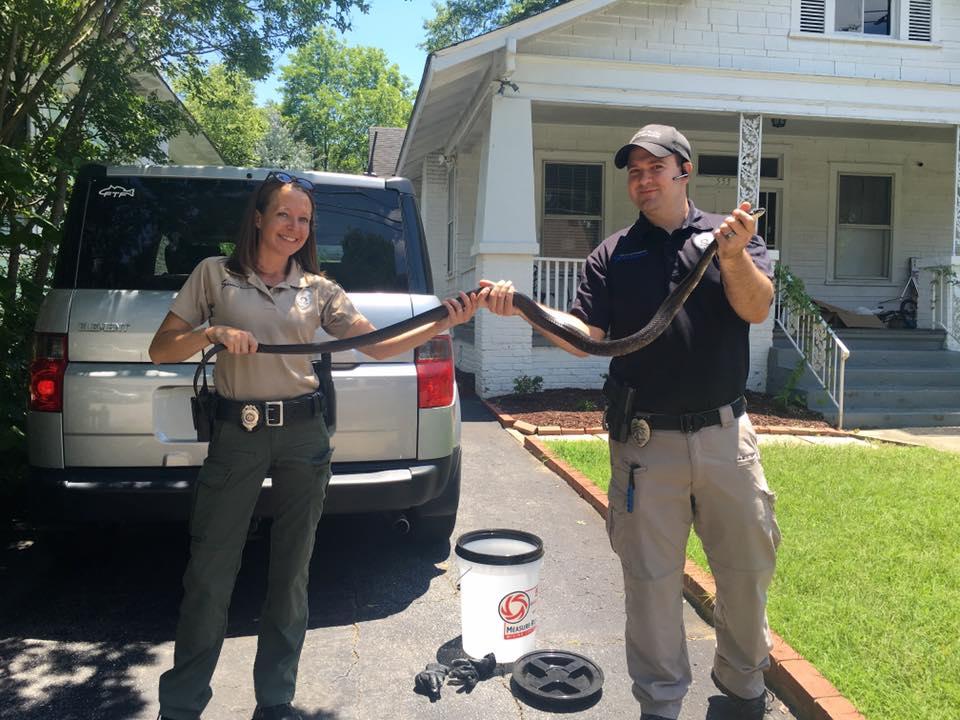 Snake wrangers (Source: Spartanburg PD)