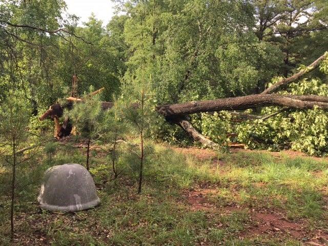 Downed tree on Brandon Road. (6/13/17 FOX Carolina)