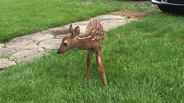 Buckshot (FOX Carolina/6/22/17)