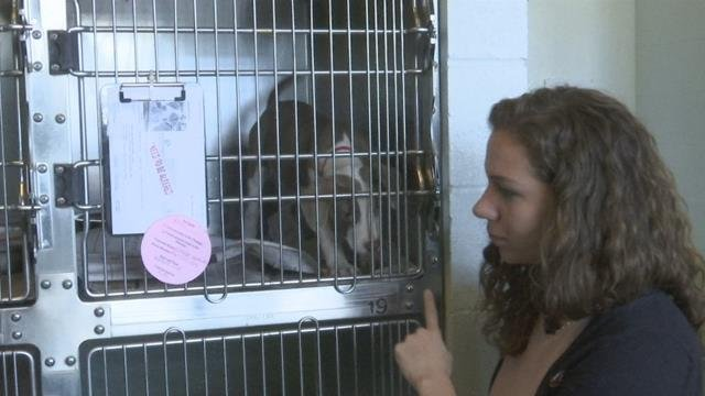 Greenville Humane Society in need of help