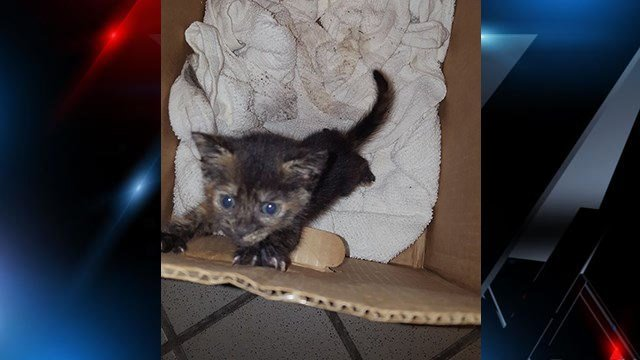 Kitten saved from storm drain. (Credit: Jamie Koch)