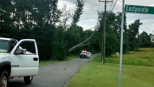 Tree down on Anderson Street in West Union (Source: Linda Carver)