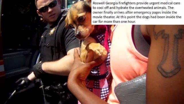 Police, firefighters administer medical treatment to dogs suffering heat stroke after left in hot car (Source: Roswell PD)