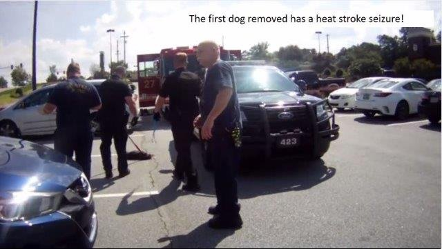 Dog suffers heat stroke, seizures after locked in hot car. (Source: Roswell PD)