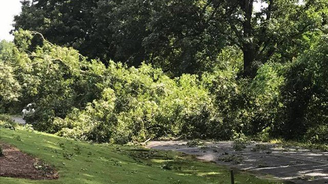 Downed tree in Powdersville (Source: Ben Allen)
