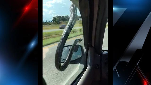 Snake dangles from truck roof as it travels along I-26 (Source: Becky Castro)
