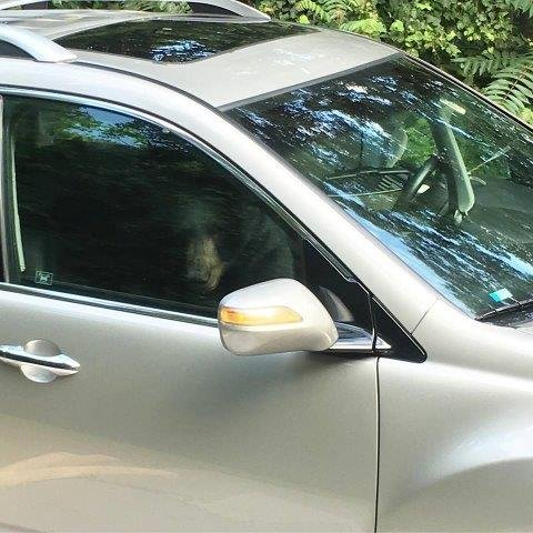 Bear Trapped In Suv After Breaking In Totals It From Inside