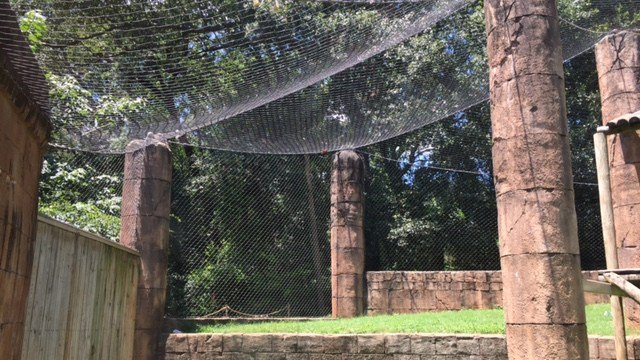 Greenville Zoo orangutan exhibit. (7/9/17 FOX Carolina)