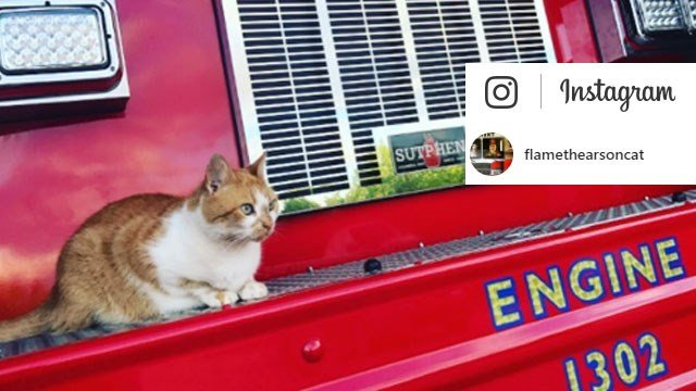 Flame the Arson Cat. (Source: Instagram)