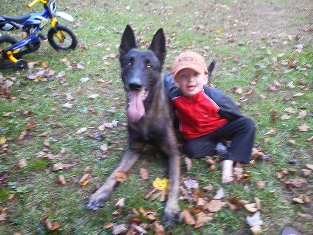 Chris with handler's son (Source: Deputies)