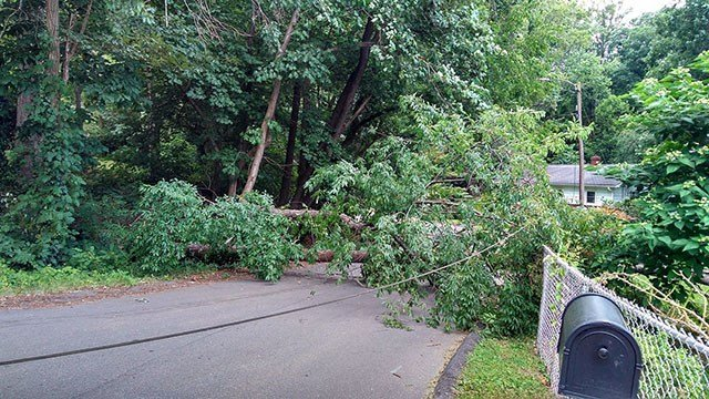 Large tree down on Talmadge Street in West Asheville area. (Source: Crystal Waldrop)