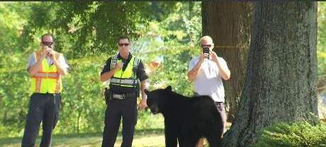 Bear spotted in Landrum (FOX Carolina/ 7/22/17)