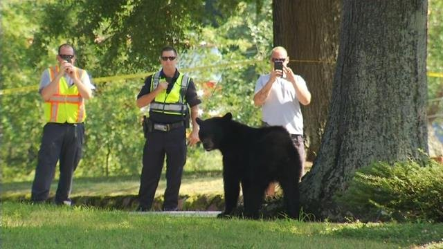 Bear spotted in Landrum
