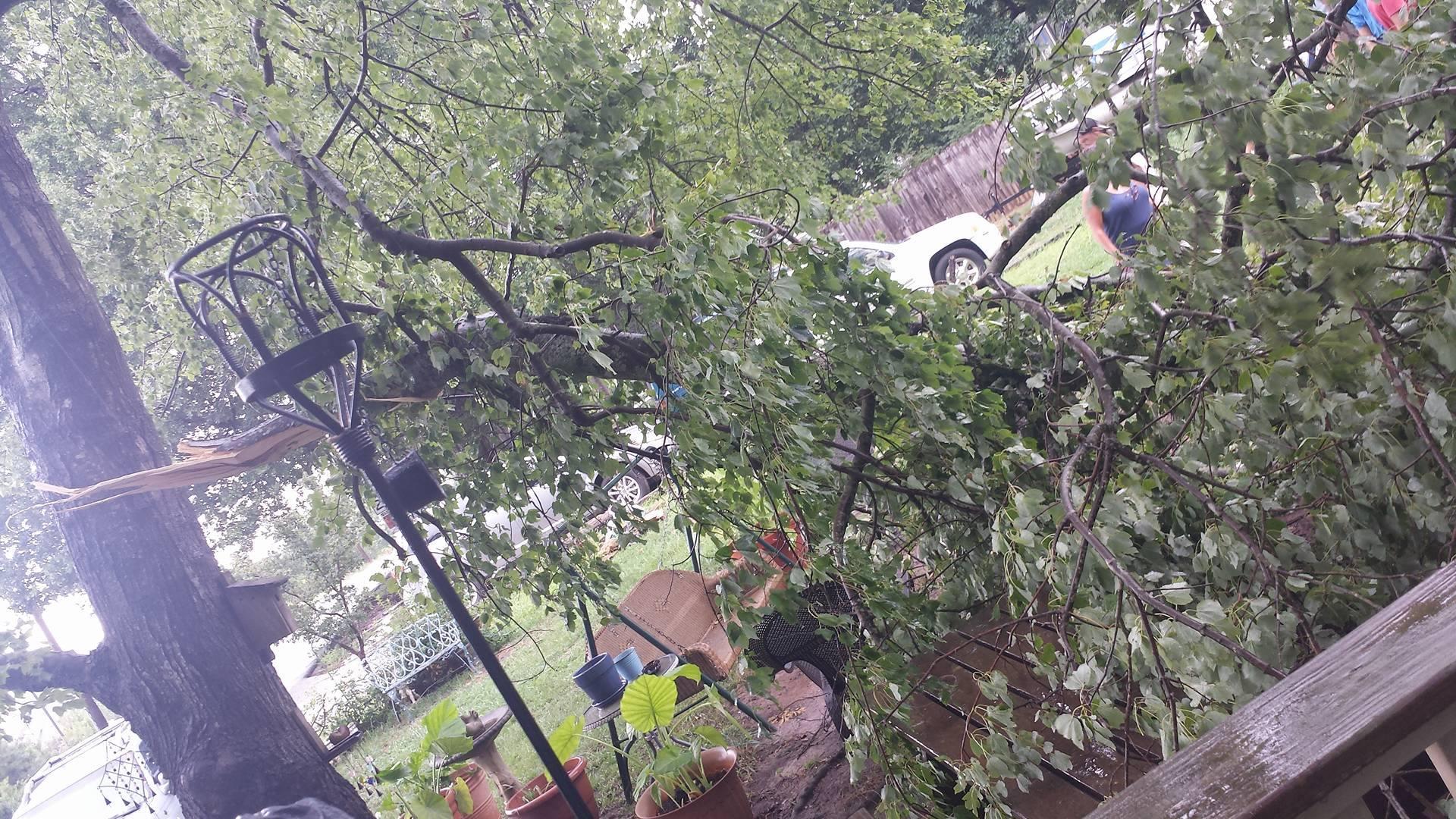Downed silver maple tree near Cherrydale (Source: Kacie Garrett)